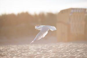 Descobrindo Provérbios: Onde eu posso me apoiar